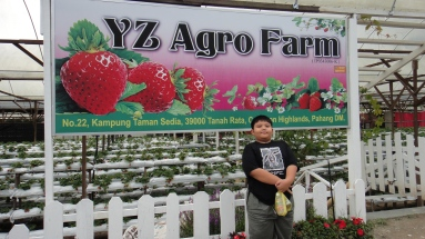 Muslim Strawberry Farm